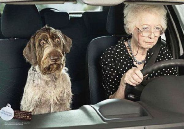 grandma with dog in car
